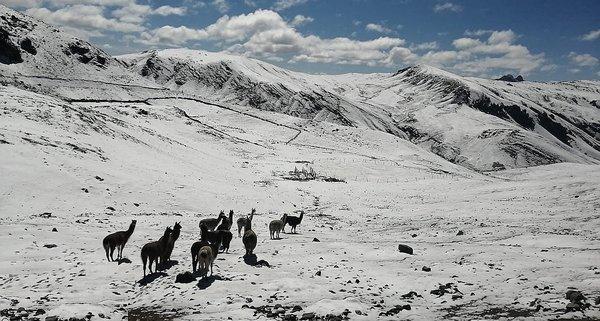 Intensas nevadas se registran en partes altas de Antabamba